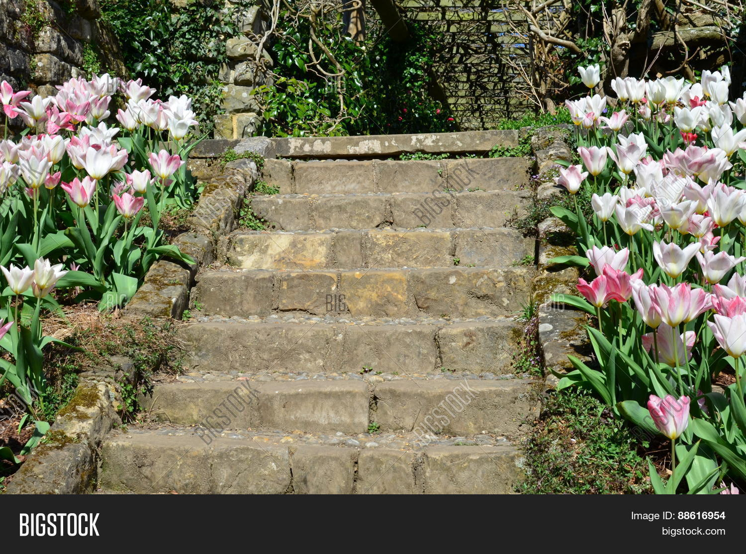 Stone Garden Steps With Flower S On Each Side Image Taken In Spring A English Formal