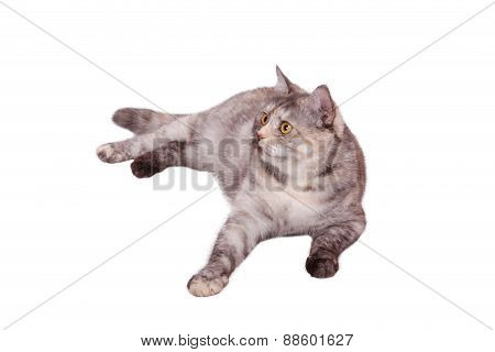 Cat On The White
