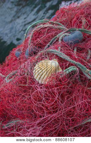 Purple Fishing Net
