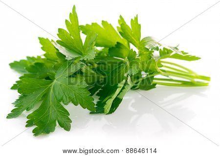Bunch fresh parsley. Isolated on white background