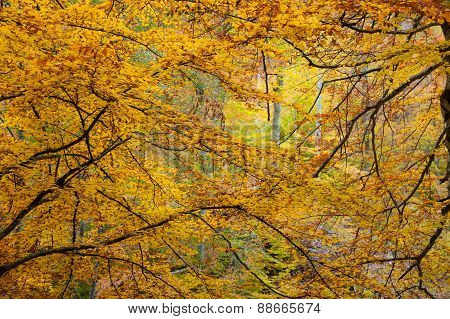 Autumnal branches