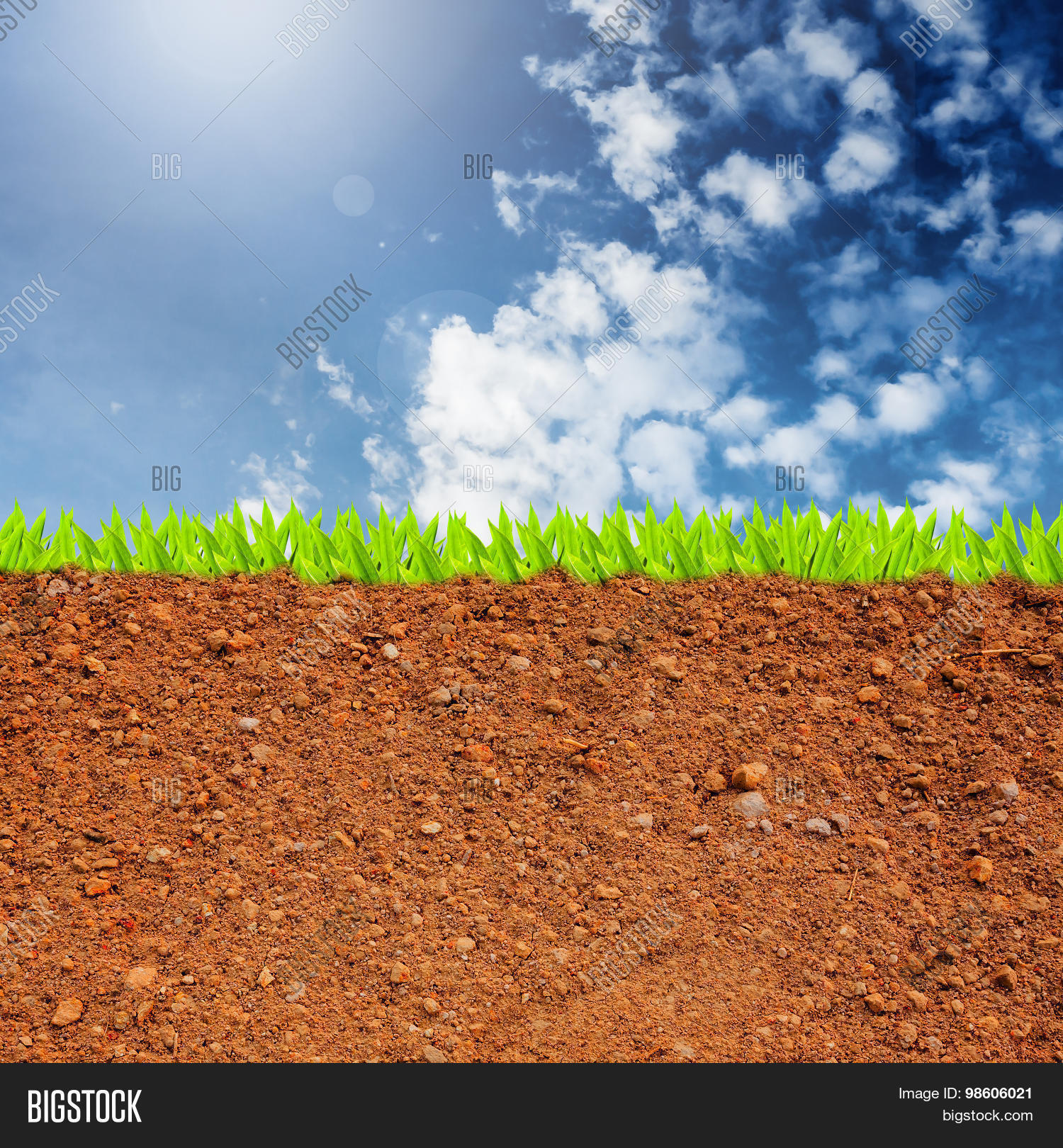 Cross Section Grass Image & Photo (Free Trial)
