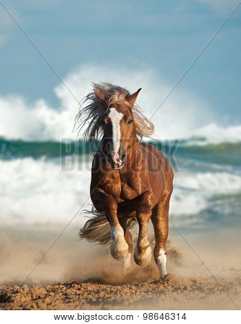 Wild Chesnut Draft Horse Running