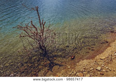 Leafless Shrub In Water
