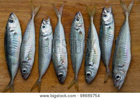 raw fish (scad)