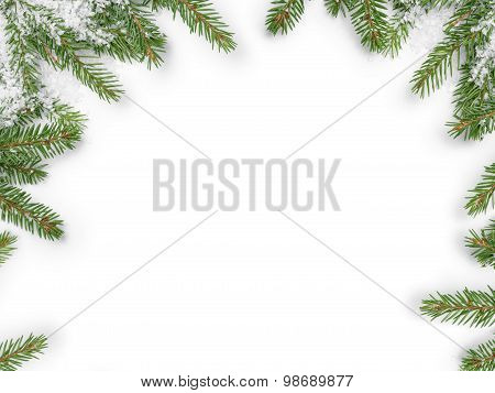 background from fir twigs with shadow