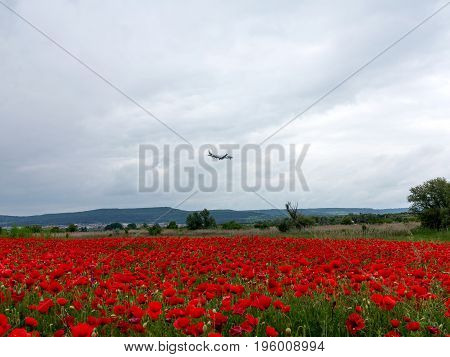 Plane flies in cloudy sky. Flowers Red poppies blossom on wild field. Beautiful field red poppies with selective focus. Red poppies in soft light. Natural Drugs. Glade red poppies. Lonely red poppy. blur