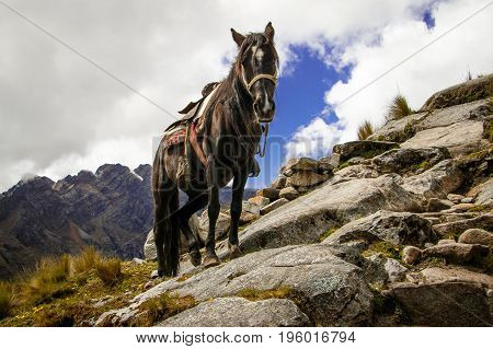 Horse struggeling with difficult terrain in Santa Cruz Trek, Huascaran NP, Peru