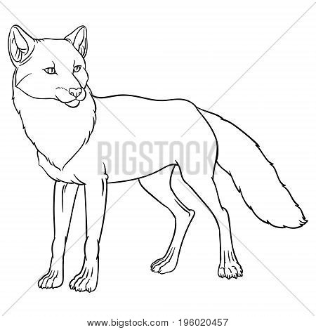 naturalistic illustration of fox - vector hand drawing