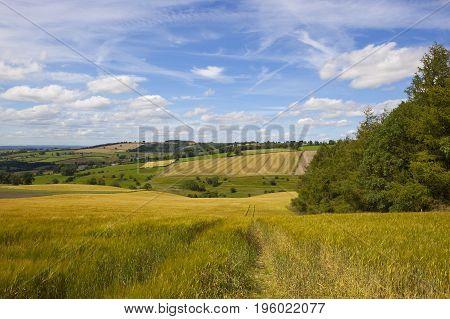 Hillside Barley