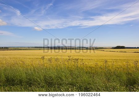 Wildflowers And Barley