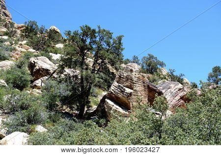 Hillside in Red Rock Canyon Nevada USA