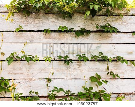Green Grass In Front Of Old Wooden Planks Rustic Fence, Abstract Landscape For All Of Your Project