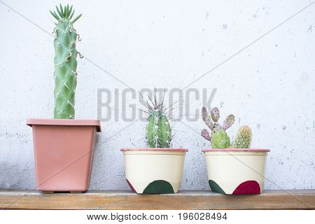Three pots with different types of cactus.