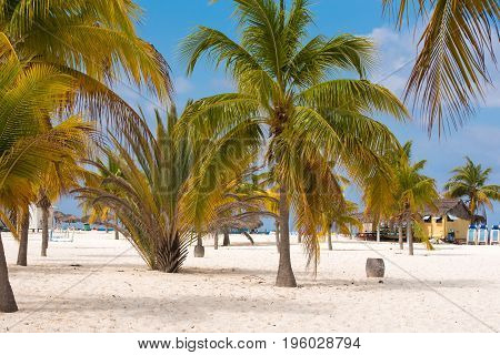 White Sand And Palm Trees On The Beach Playa Sirena, Cayo Largo, Cuba.