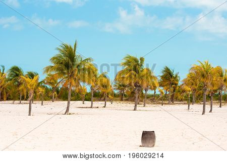 White Sand And Palm Trees On The Beach Playa Sirena, Cayo Largo, Cuba. Copy Space For Text.
