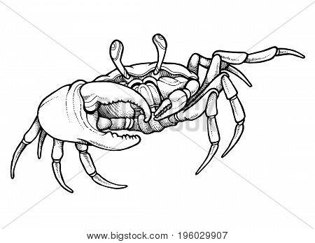 Hand drawn line art crab - vector illustration