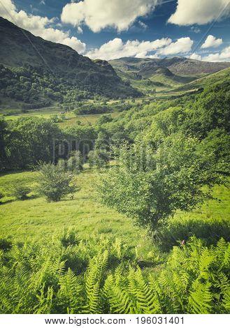 Nant Gwynant Valley Ferns and Shropsh and Bright Sunny Day