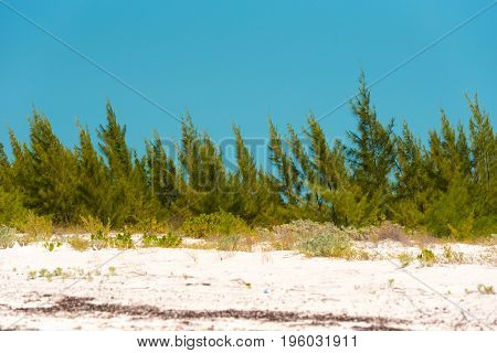 Plants On The Beach Of Island Of Cayo Largo, Cuba. Copy Space For Text.