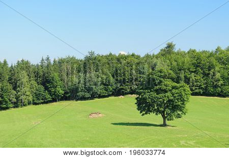 summer landscape with a lonely tree in the meadow and green forest behind it on sunny day, Beskydy mountains, Czech Republic
