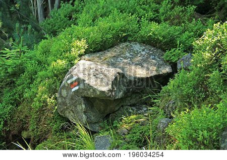 red sign for tourists on the stone in the blueberry bush in summer, Beskydy mountains, Czech Republic