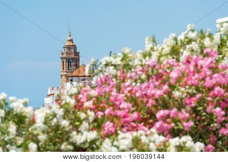 Blooming Oleander Against The Background Of The Church Of Sant Bartomeu And Santa Tecla In Sitges, B