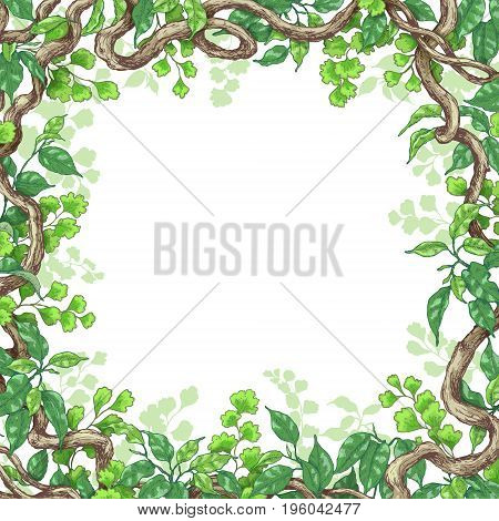 Hand drawn branches and leaves of tropical plants. Square frame made with green fern ficus and liana trunks. Space for text. Vector sketch.