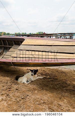 Familiar Dog On Don Det