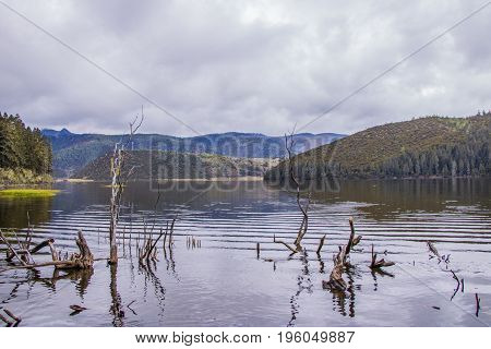 Withered Tree Branch In The Lake Nature View In Pudacuo National Park In Shangri La, Yunnan Province