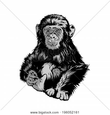 Vector kids apes are sitting ,, to design t-shirts or made background will be interesting