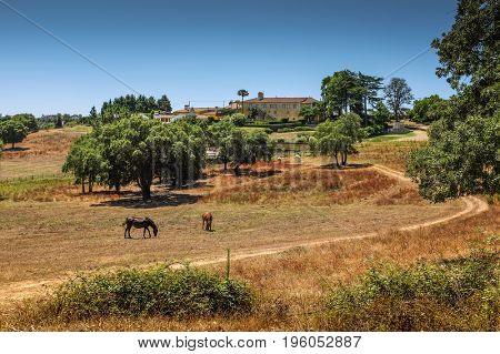 Beautiful portuguese countryside landscape with horses pasturing