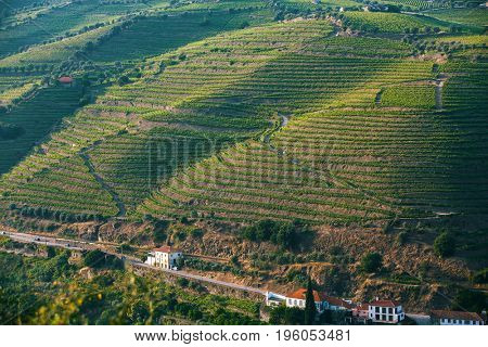 Top view of the vineyards are on a hills. Douro Valley, Portugal.