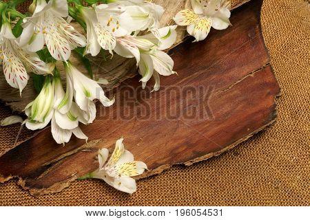 White Alstroemeria. White flower