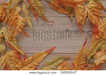 Nature Garden Plant Autumn Red Fern Leaf Retro Wood Vintage Plate Table Blank Template Background
