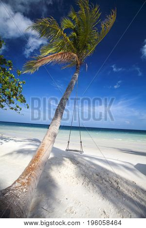 Tropical beach background with palm trees white sand, blue sky and a swing hanging on the tree