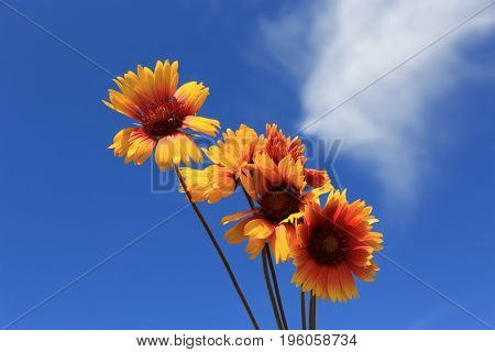 nice summer flowers on sky background