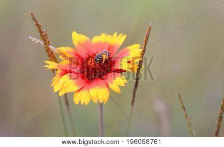 bee on nice summer flower