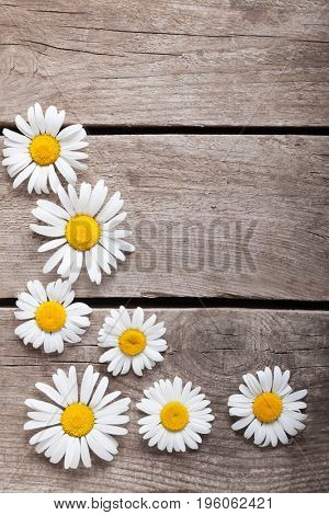 Background of daisies on an old wood board. (top view)