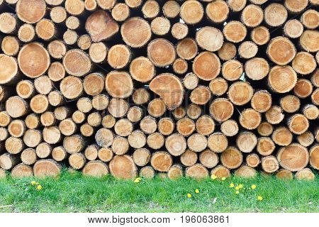 Woodpile in the meadow