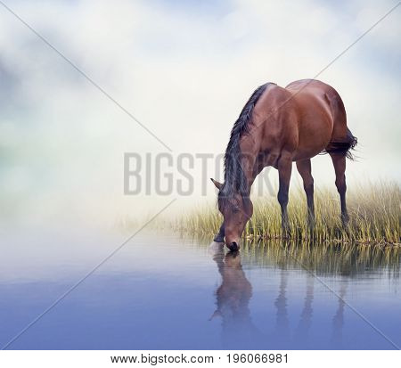 Brown  horse drinking water in a lake