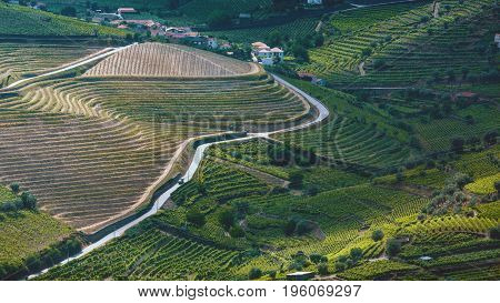 Top view of vineyards are on a hills of Douro Valley, Portugal.