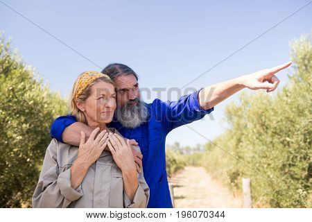 Couple pointing at distance in olive farm on a sunny day
