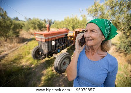 Happy woman talking on mobile phone in olive farm on a sunny day