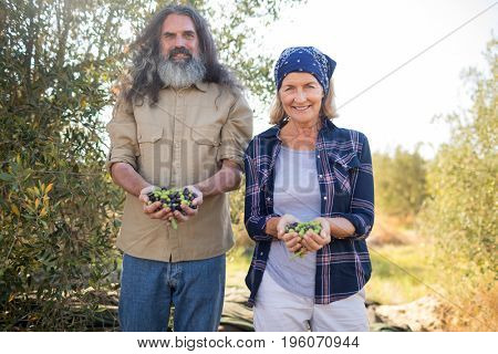 Portrait of happy couple holding harvested olives in farm