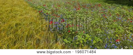 Agriculture field and a meadow with a lot of spring flowers