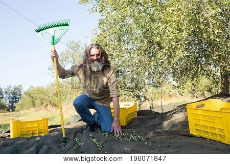 Portrait of happy farmer with rack collecting olives in farm