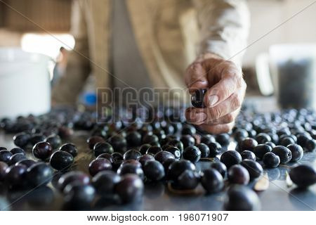 Mid-section of worker checking a harvested olives in factory