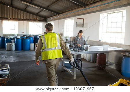 Worker pulling a trolley with crate in olive factory