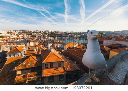 Seagull is sitting on the background of the old city of Porto, Portugal.
