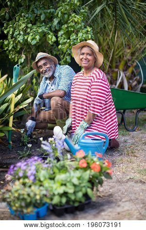 Portrait of smiling couple planting while gardening in yard